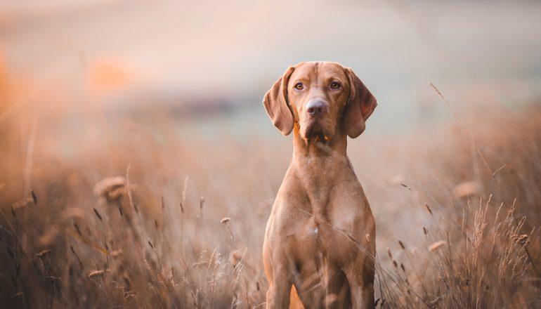 Abstammungs- und Identitätsnachweise, Erbkrankheiten für Hunde…